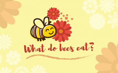 What Do Bees Eat?